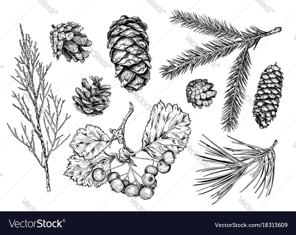 Set of hand drawn plants vector image