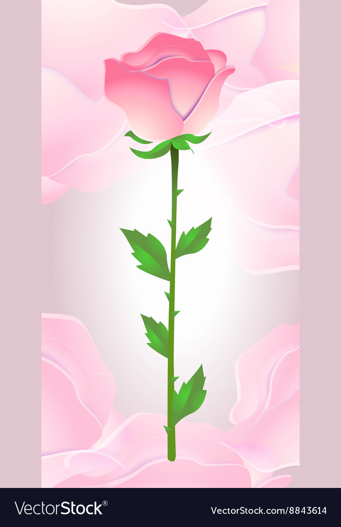 Beautiful pink rose on a pink background