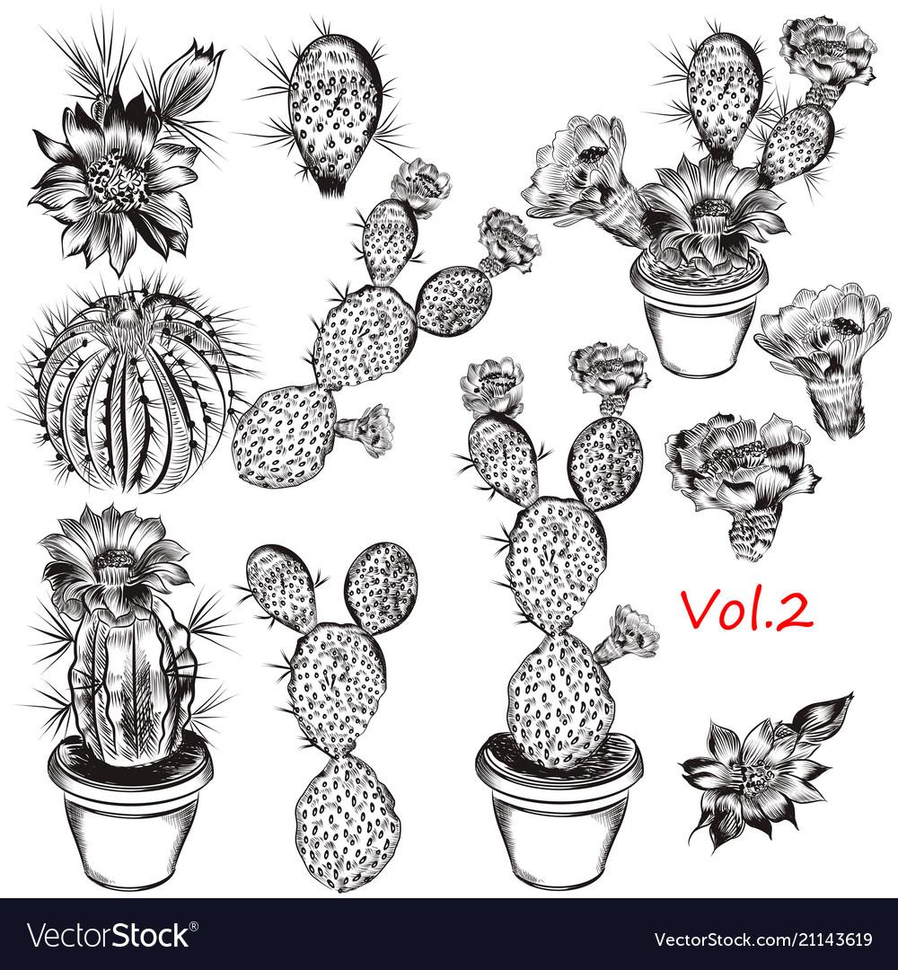 Set hand drawn cactuses for design