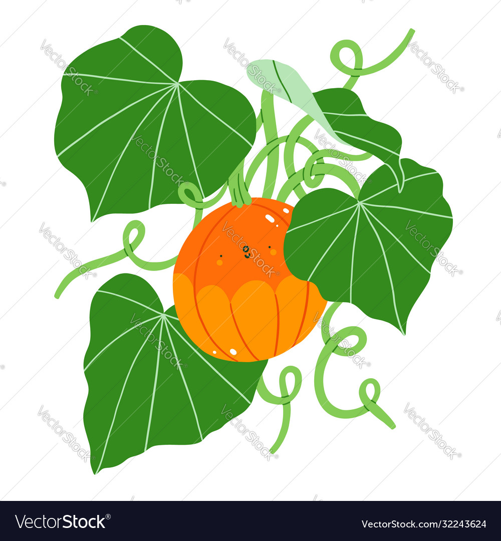 Cute pumpkin character plant with fresh green
