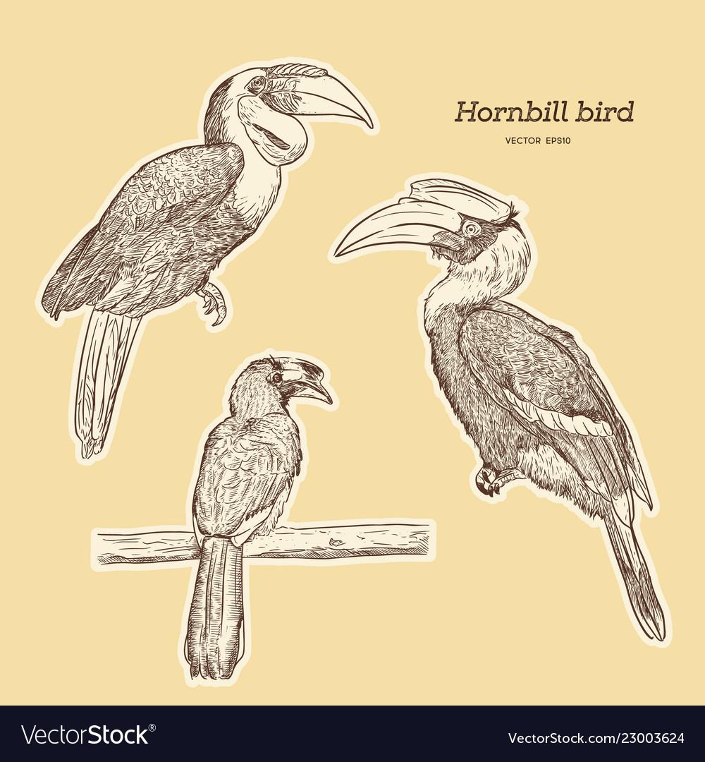 Book pdf hornbill