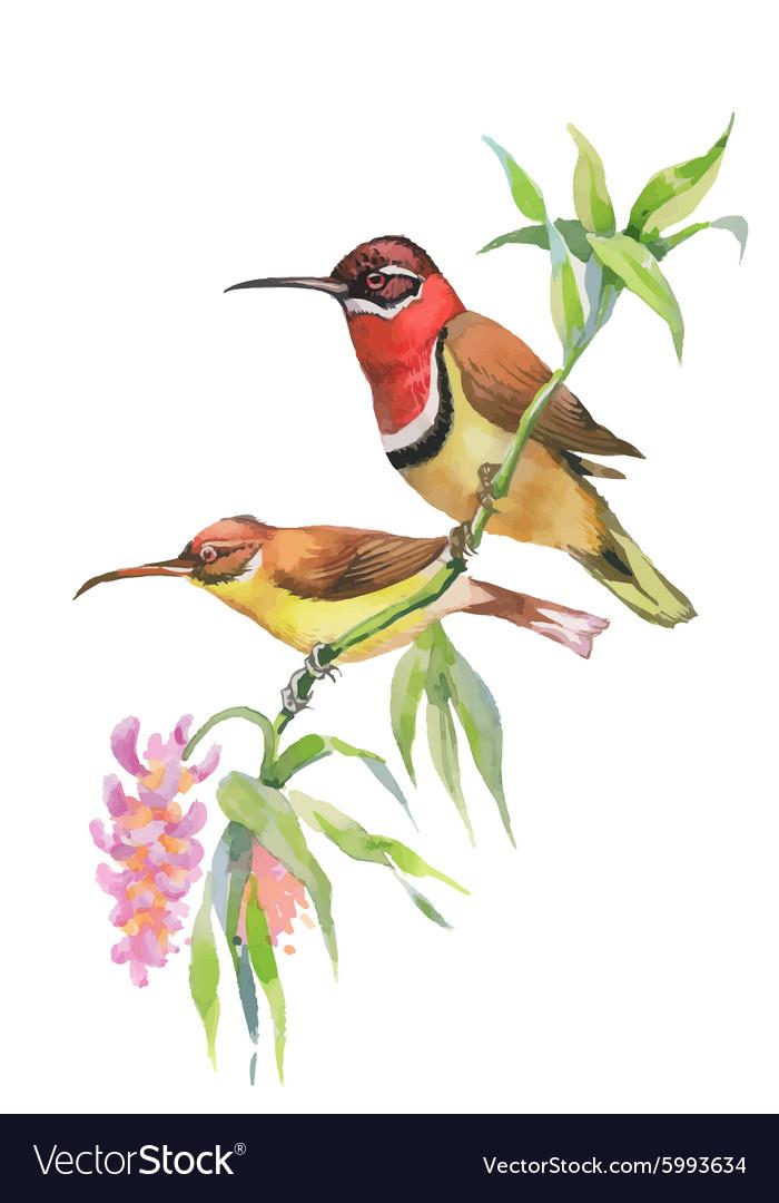 Watercolor wild exotic birds on flowers vector image