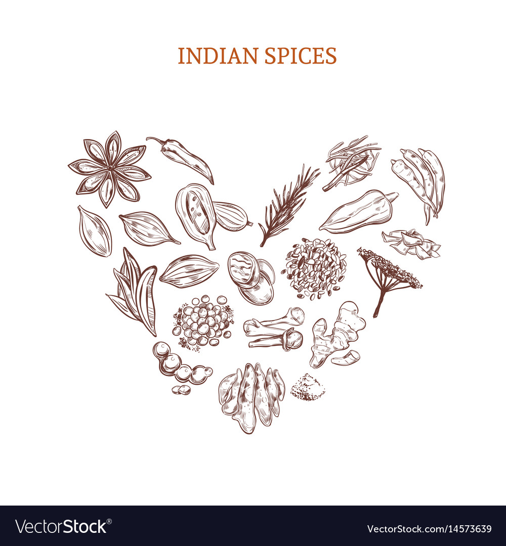Hand drawn indian spices concept vector image