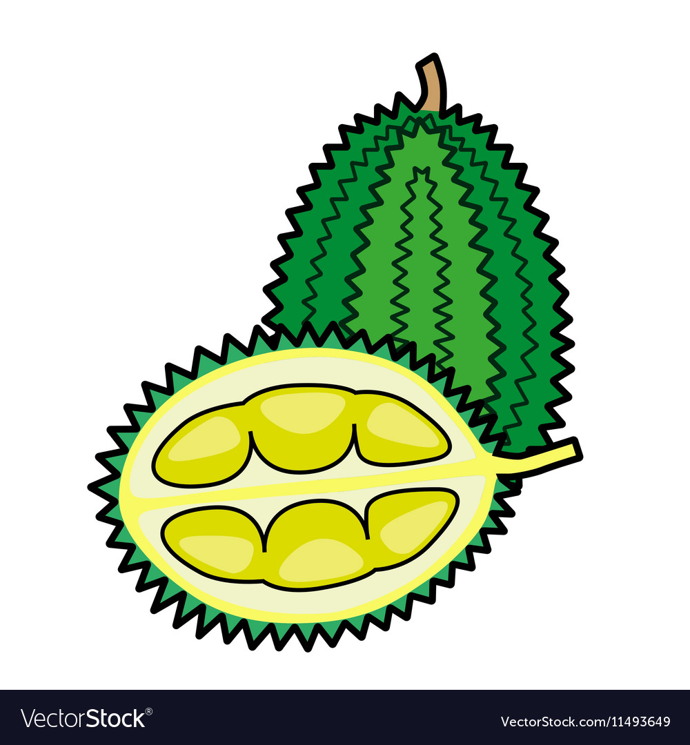 durian fruit outline Download this fruit icons set in outline style vector illustration now and search more of istock's library of royalty-free vector art that features business graphics available for quick and easy download.