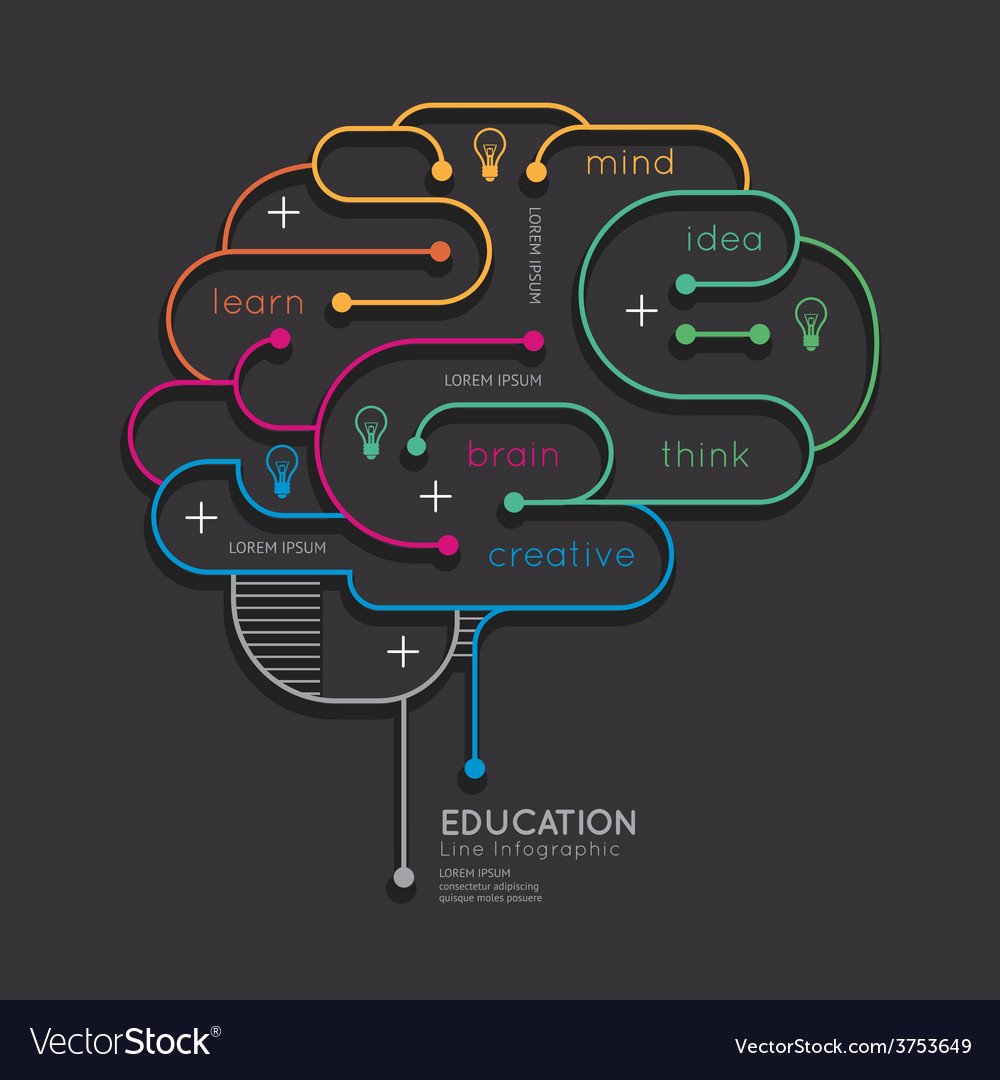 Flat linear Infographic Education Outline Brain