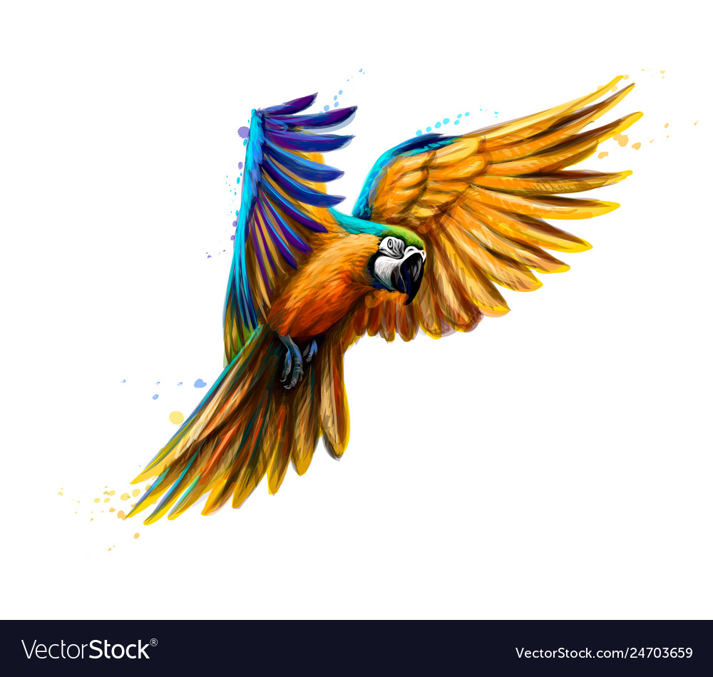 Portrait blue-and-yellow macaw in flight from a