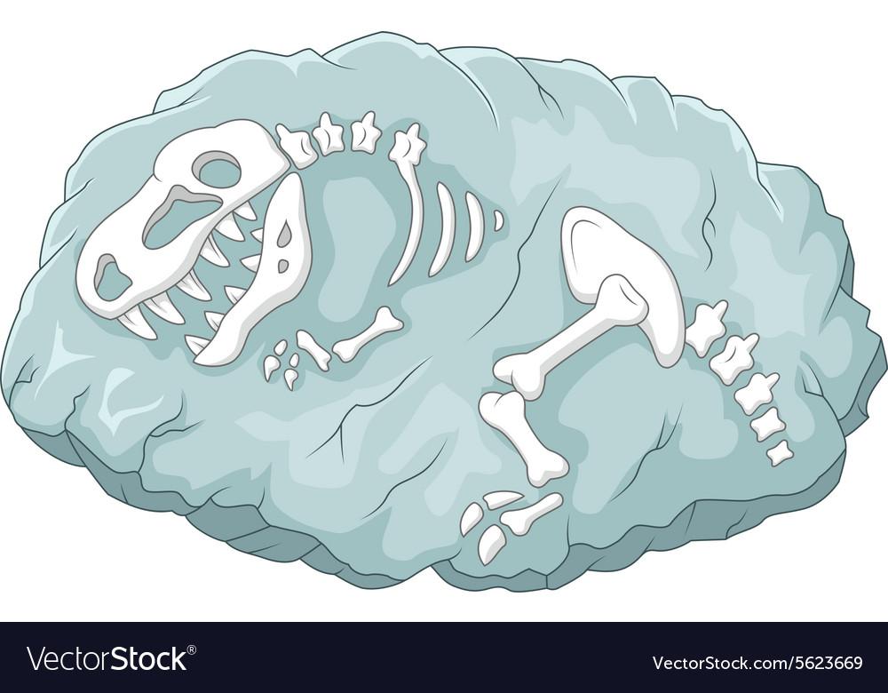Cartoon Tyrannosaurus rex fossil vector image