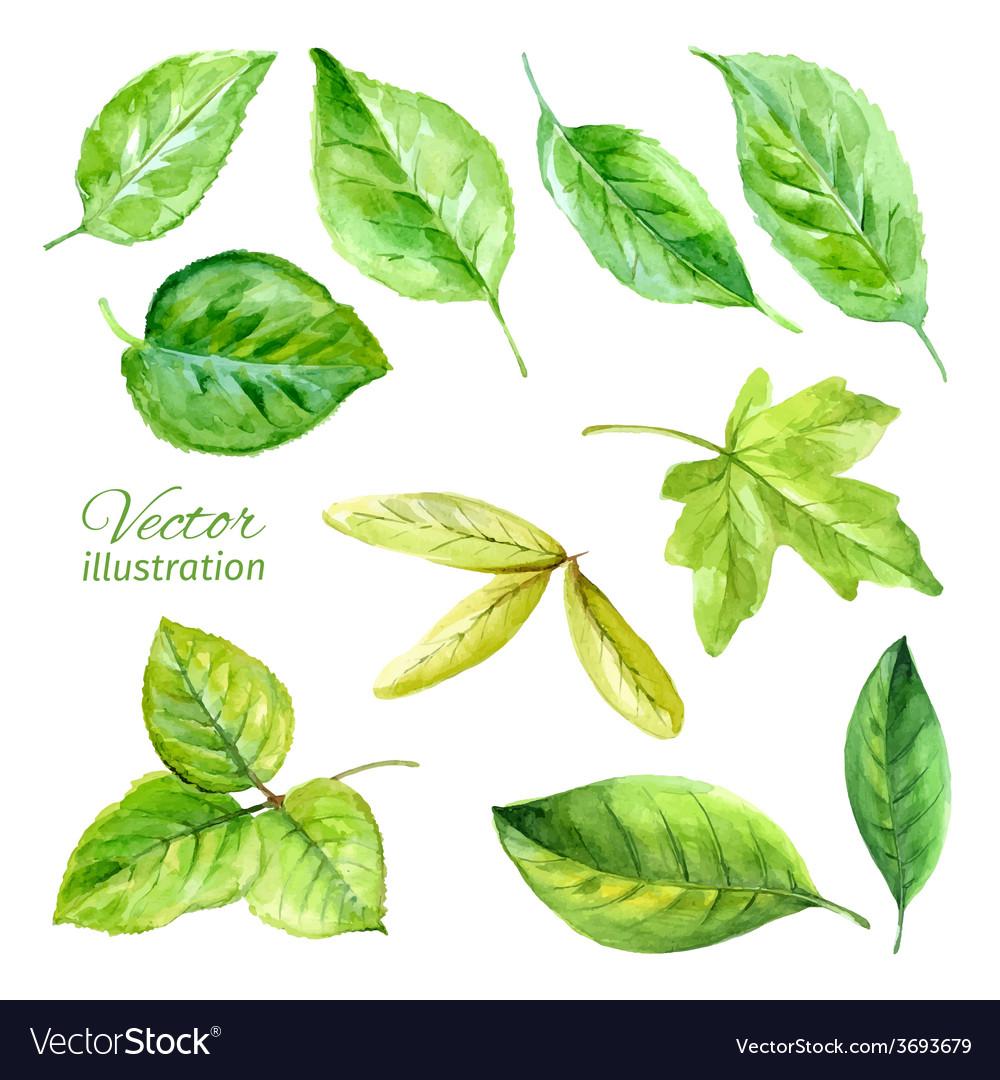 Set of spring leaves watercolor
