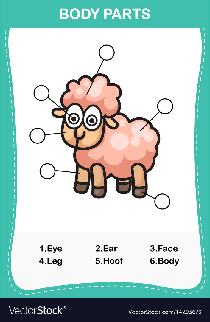 Sheep Vocabulary Part Of Body Royalty Free Vector Image