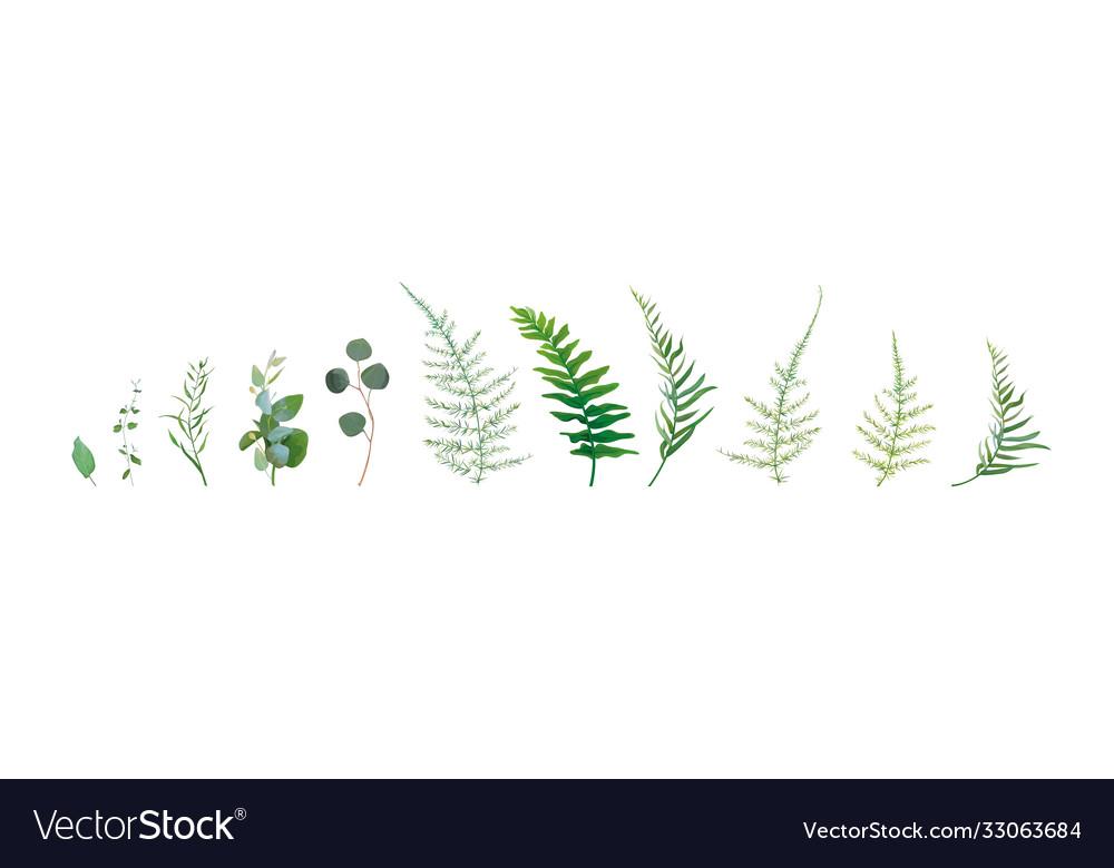 Designer watercolor nature leaf plant element set