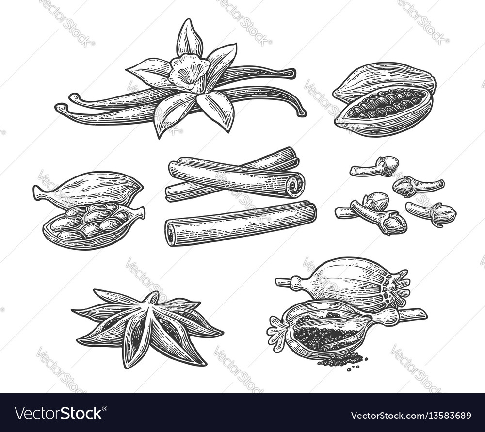 Set of spices anise cinnamon cocoa vanilla vector image