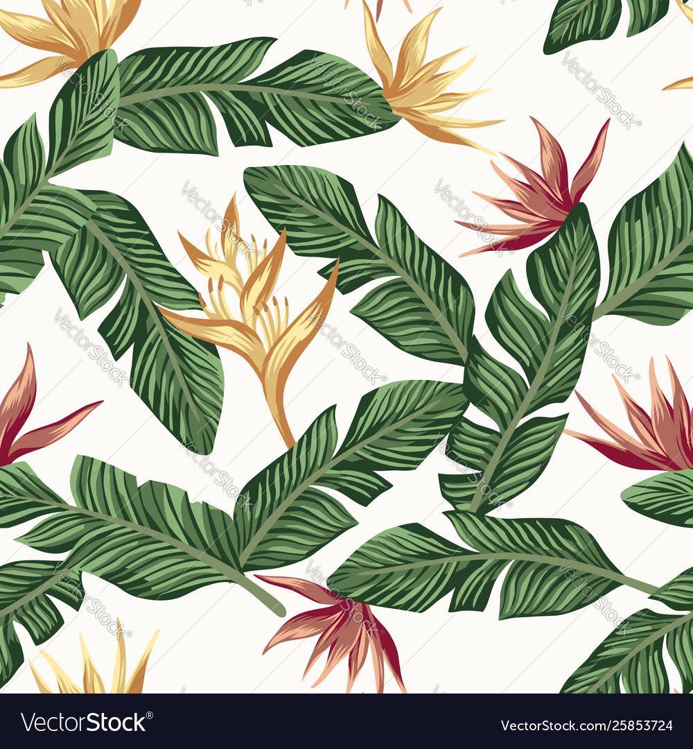 Golden burgundy bird paradise strelizia leaves
