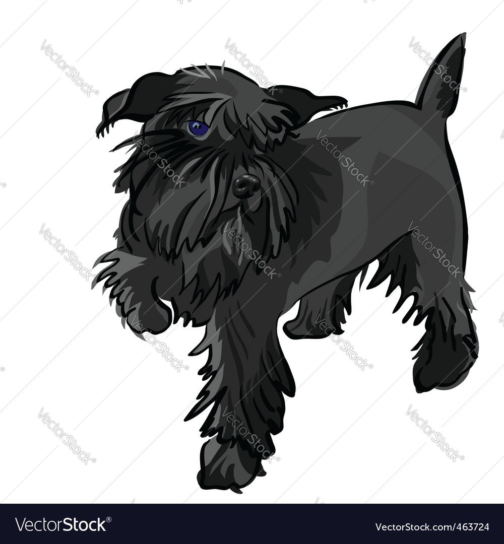 Miniature Schnauzer Dog. Black Miniature Schnauzer Dog