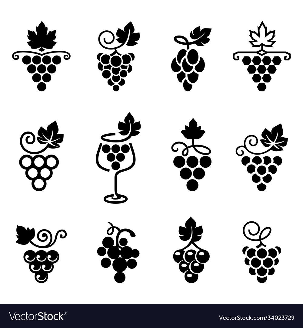 Set grapes logos and icons