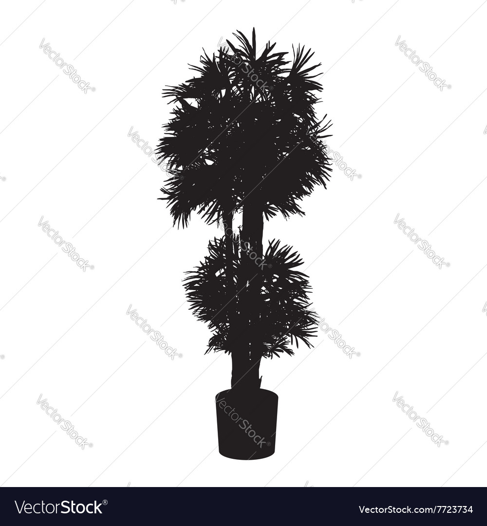 Office and house plant palm silhouette