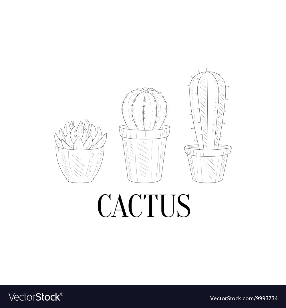 Three Chubby Home Cacti Hand Drawn Realistic vector image