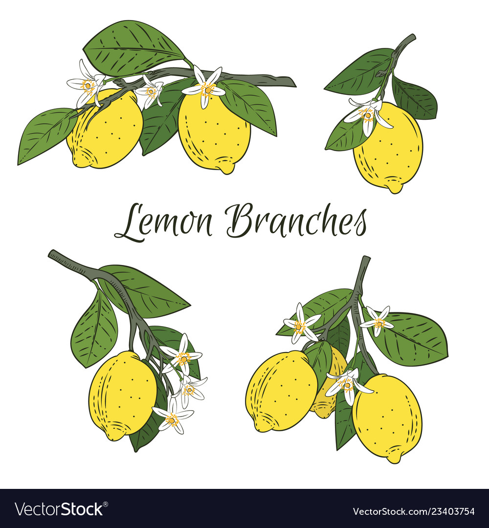 Set collection of branches with lemons green