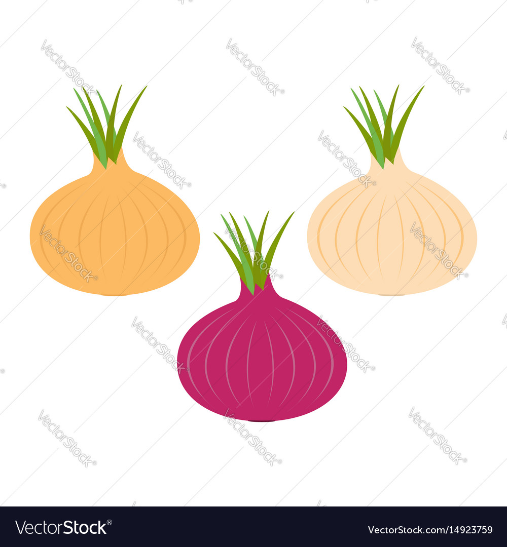 Onion ripe bulb set with green sprout icon red