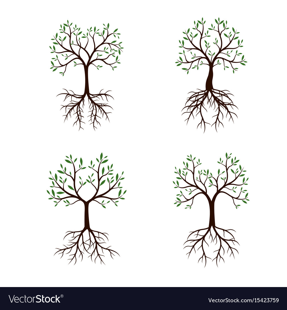 Set trees with leaves and roots