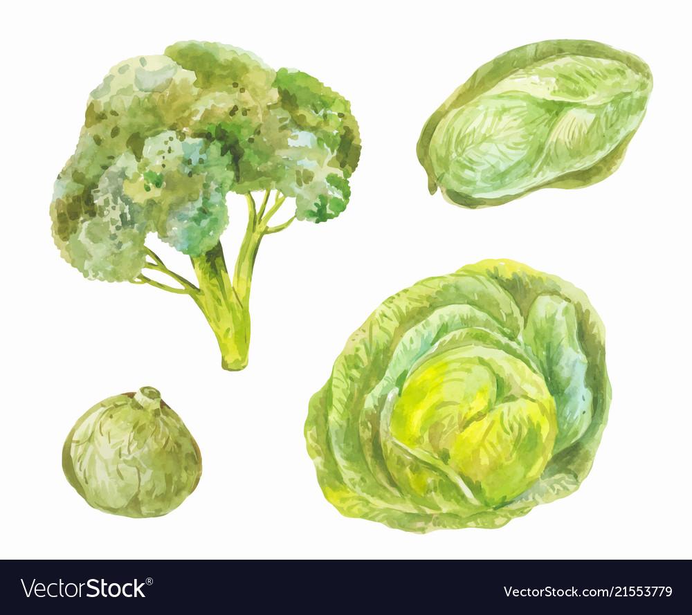 How to grow Peking cabbage