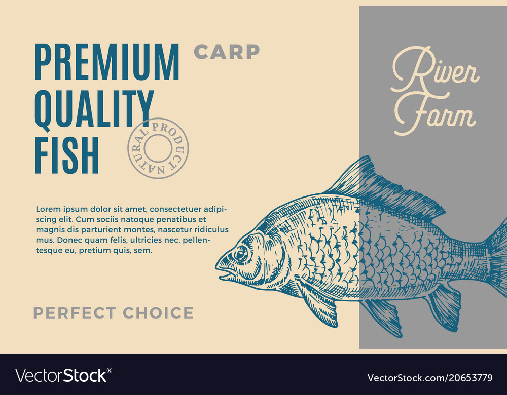 Premium quality carp abstract fish vector image