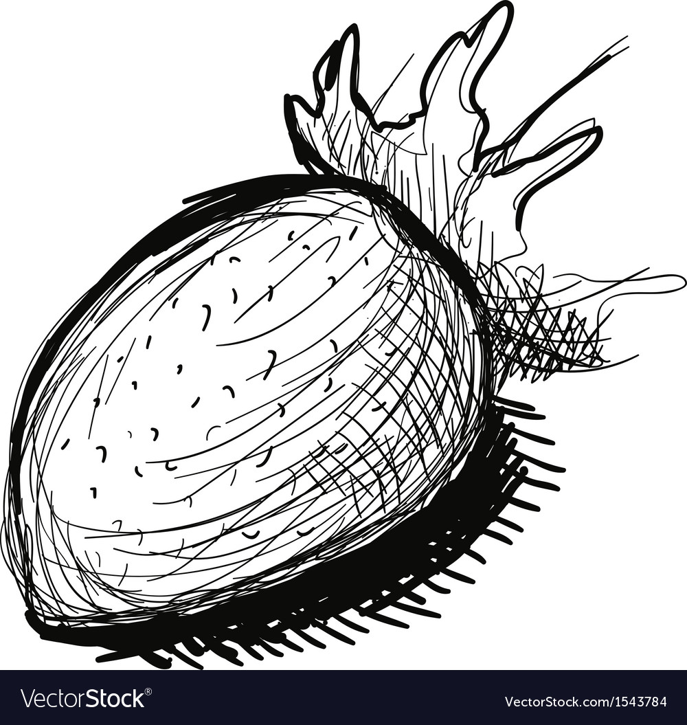Black and white strawberry sketch vector image