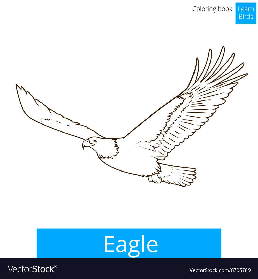 Eagle learn birds coloring book