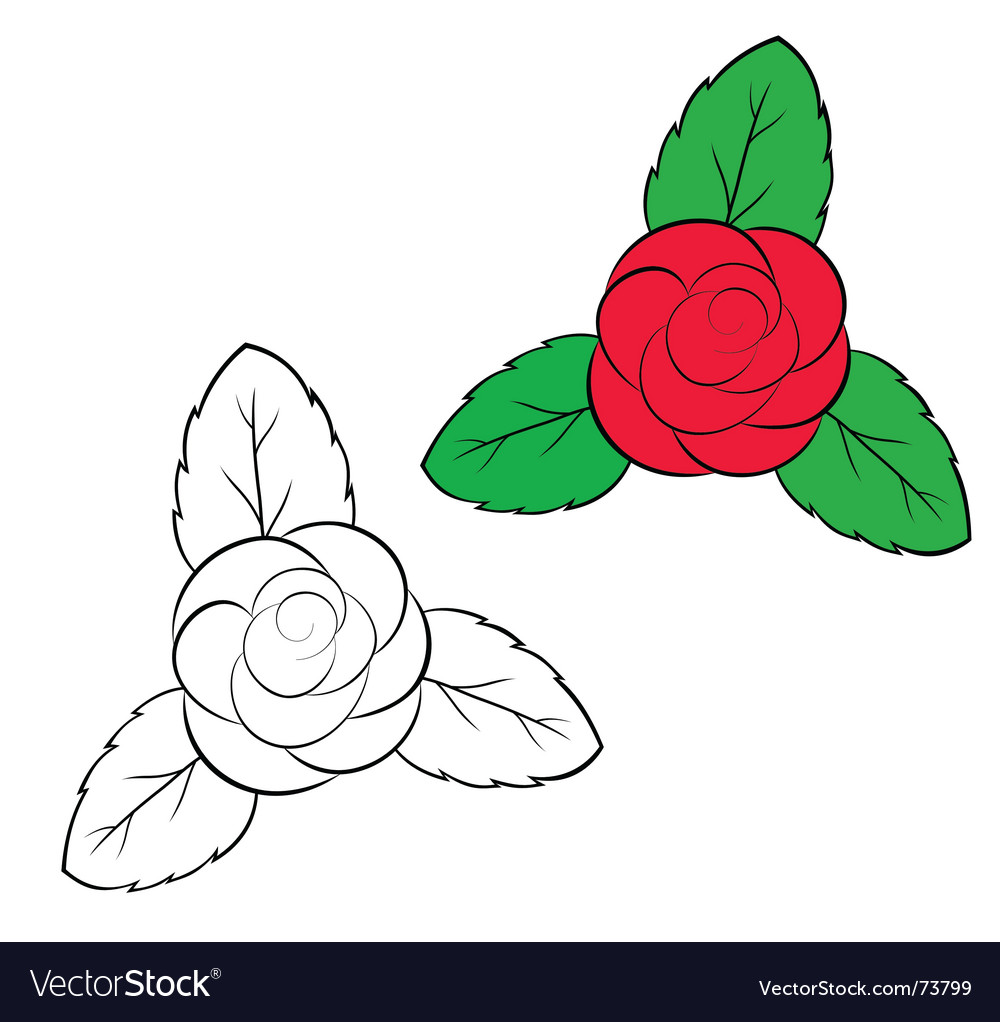 Rosa vector image