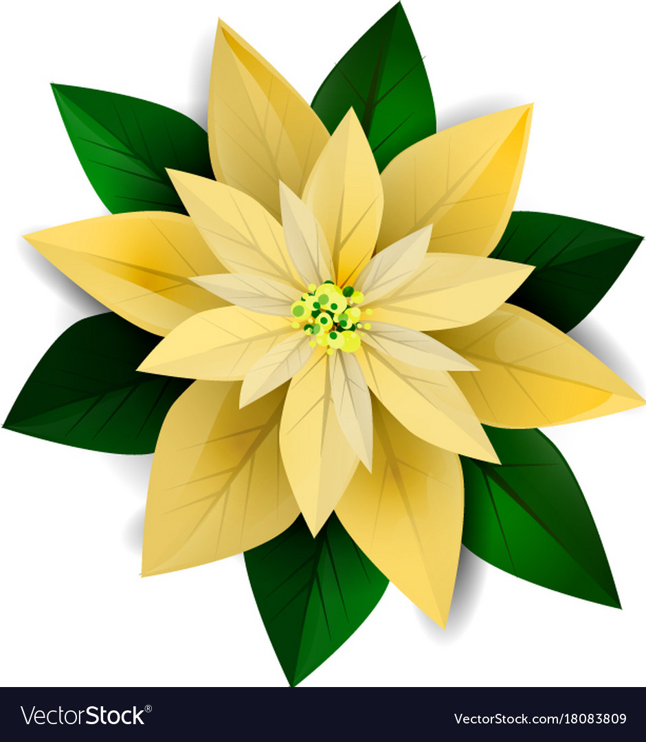 Poinsettia christmas star icon vector image