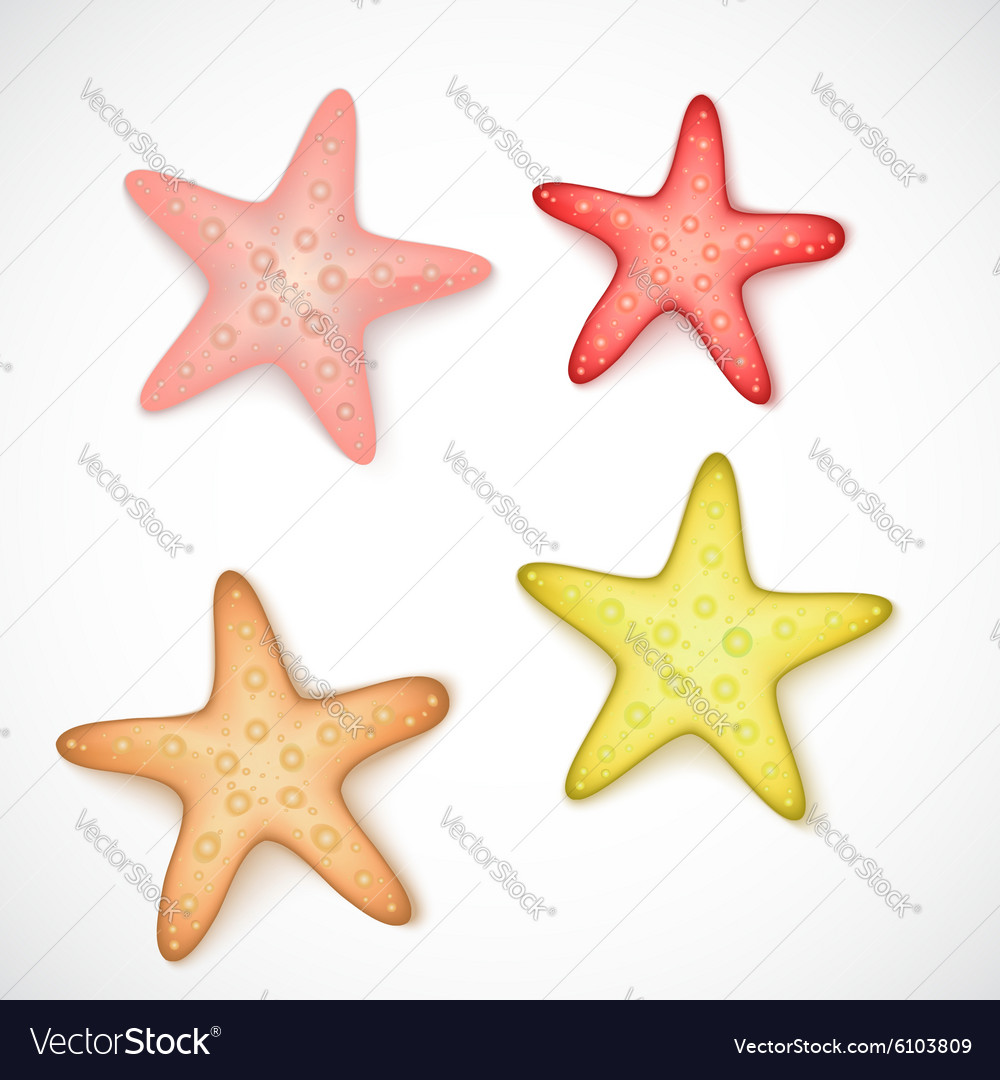 Starfishes on white background