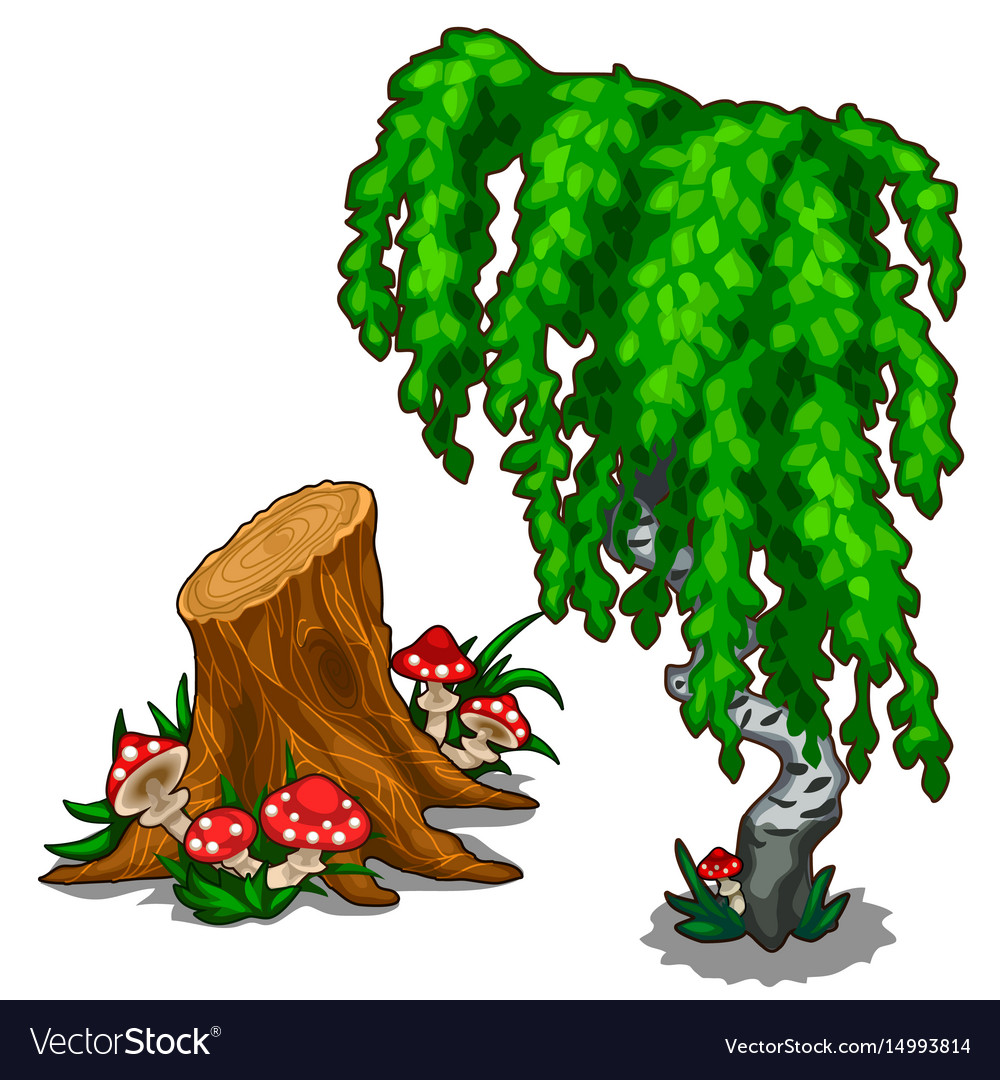 Birch and amanita growing from stump plant vector image
