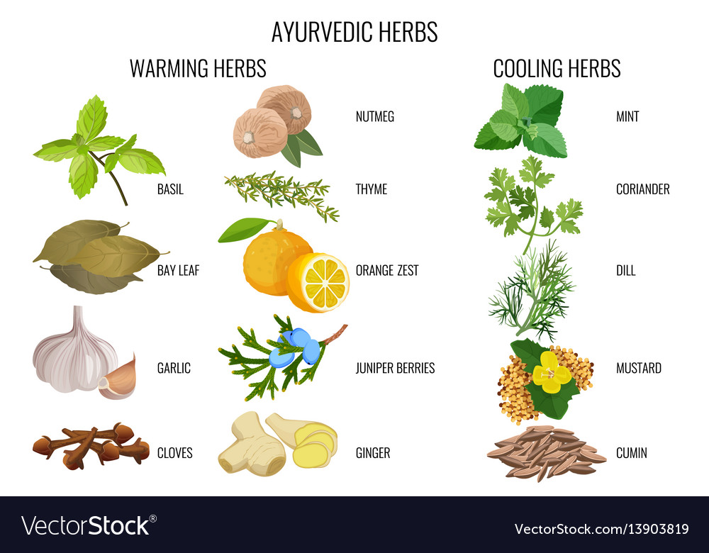Ayurvedic warming and cooling herbs banner