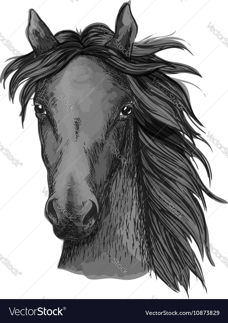 Black Arabian Horse Head Sketch Royalty Free Vector Image