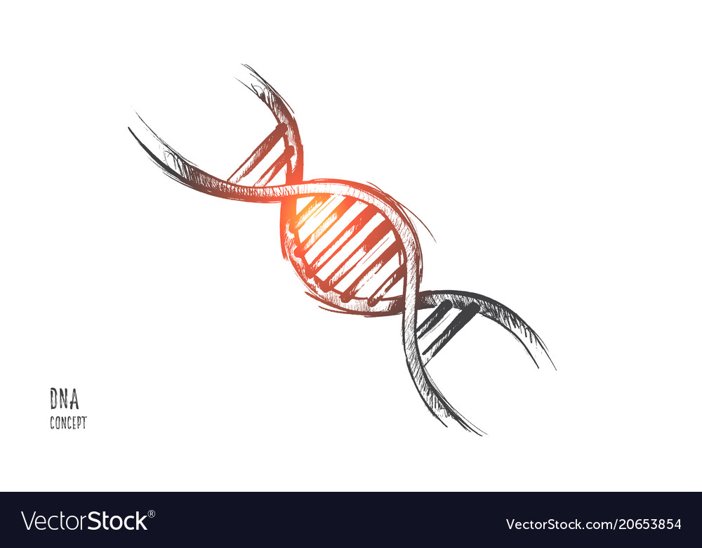 Dna concept hand drawn isolated