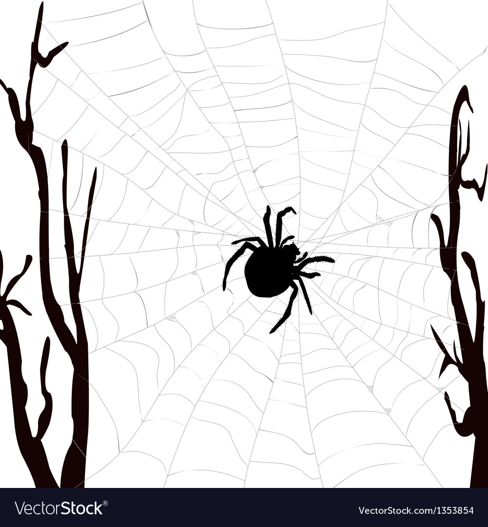 Realistic spider web with spider