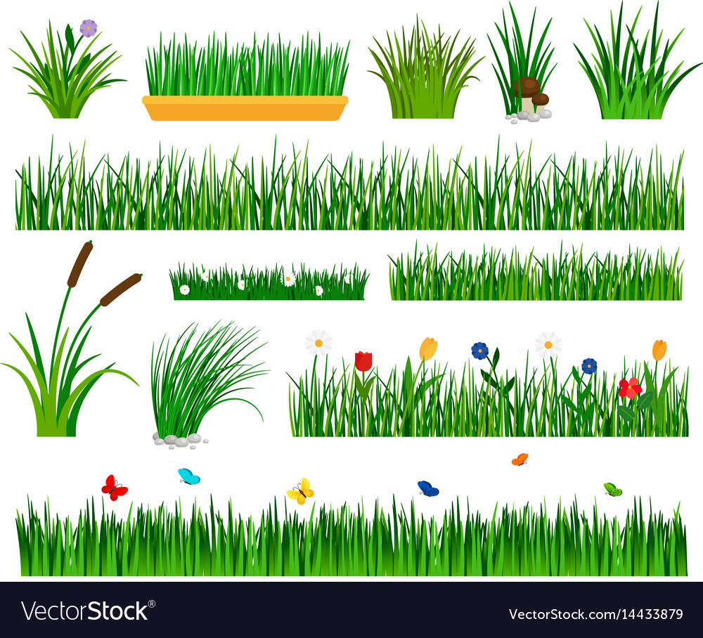 growing grass template for garden royalty free vector image