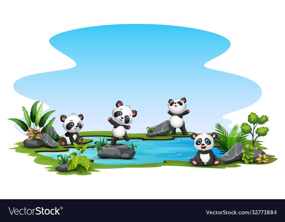 Group panda in pond