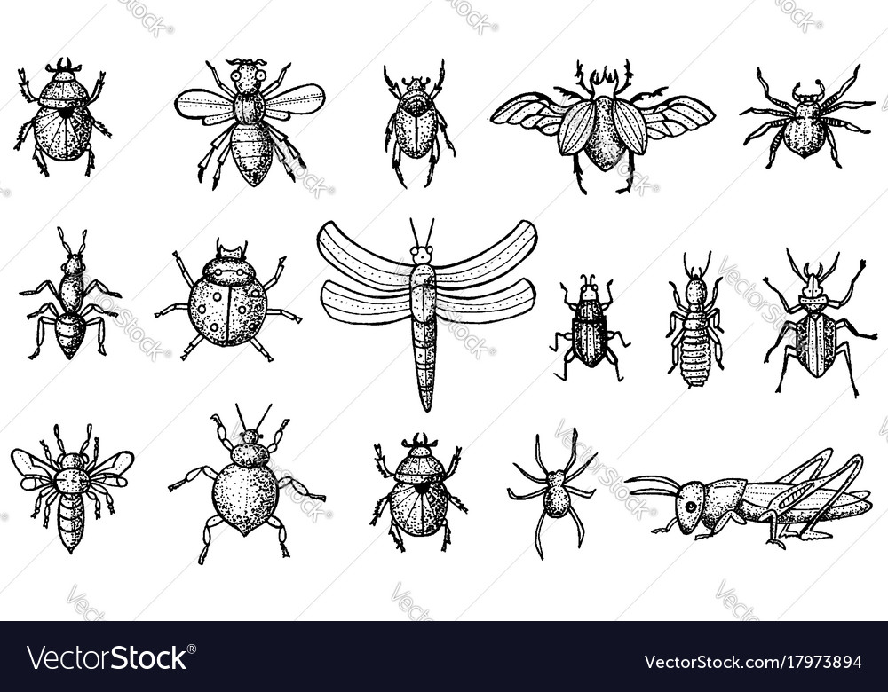 Insects set with beetles bees and spiders