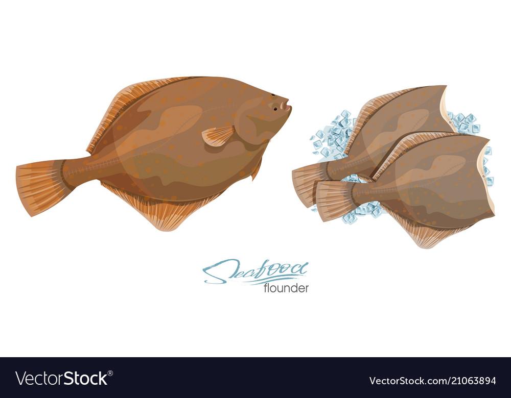 Halibut Fish Flounder Vector Images 48 I used flounder fillets instead of whole flounder (i spread the filling between two large fillets). vectorstock