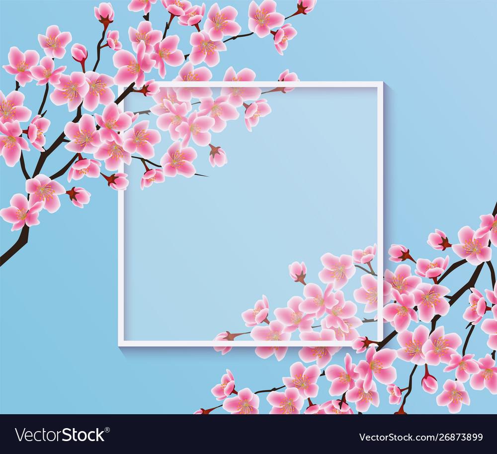 Blossom sakura or cherry flowers on a blank frame