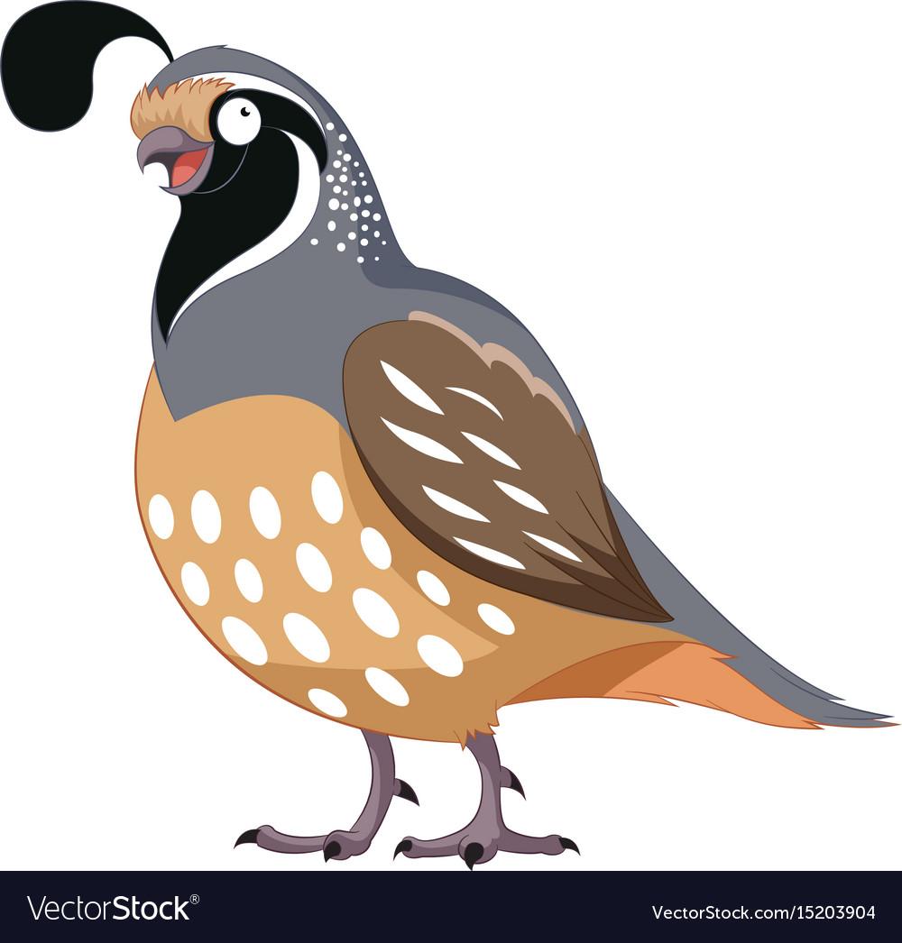 Cartoon happy quail