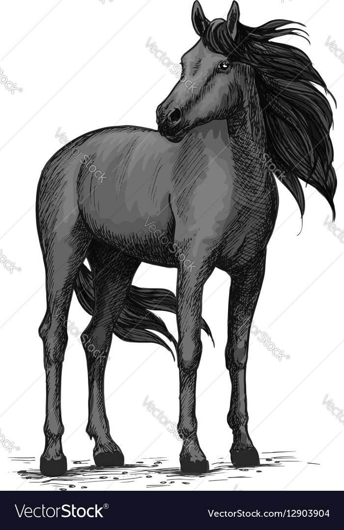 Wild Black Horse Standing Sketch Royalty Free Vector Image