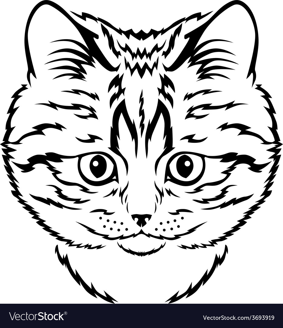 Cat kitten vector image