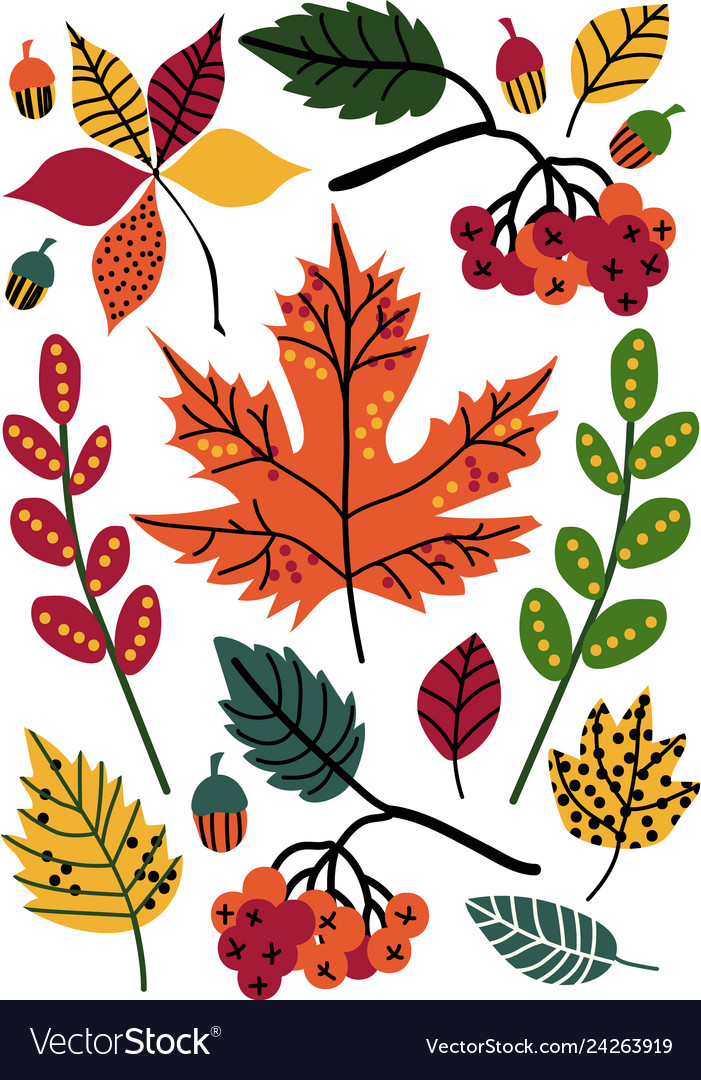 Colorful autumn leaves and berries floral