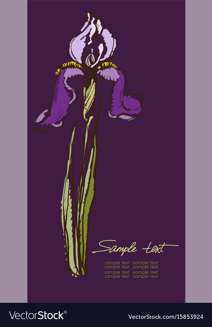 Hand drawing irises on a purple background