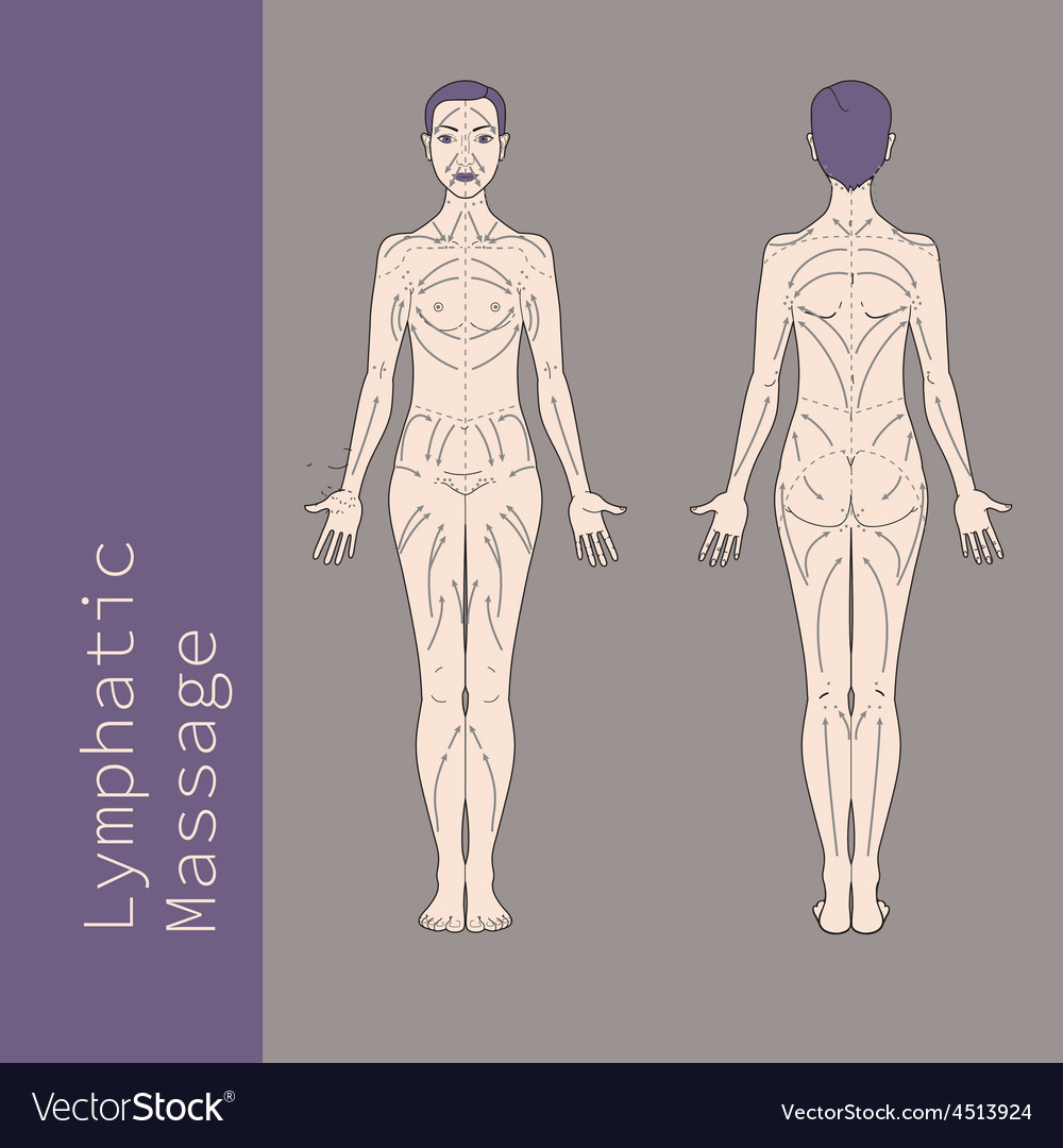 Lymphatic Massage vector image