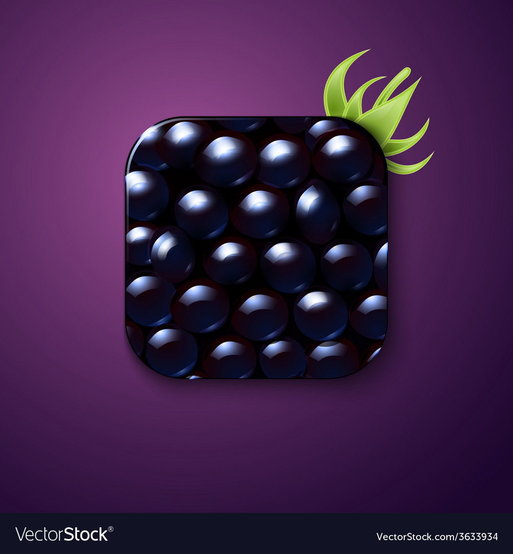 Blackberry texture icon stylized like mobile app vector image