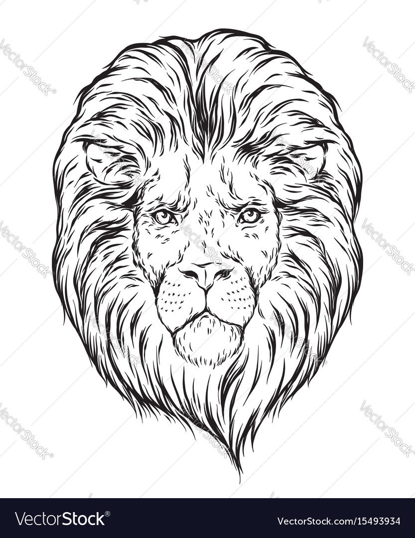 Hand drawn lion head isolated over white