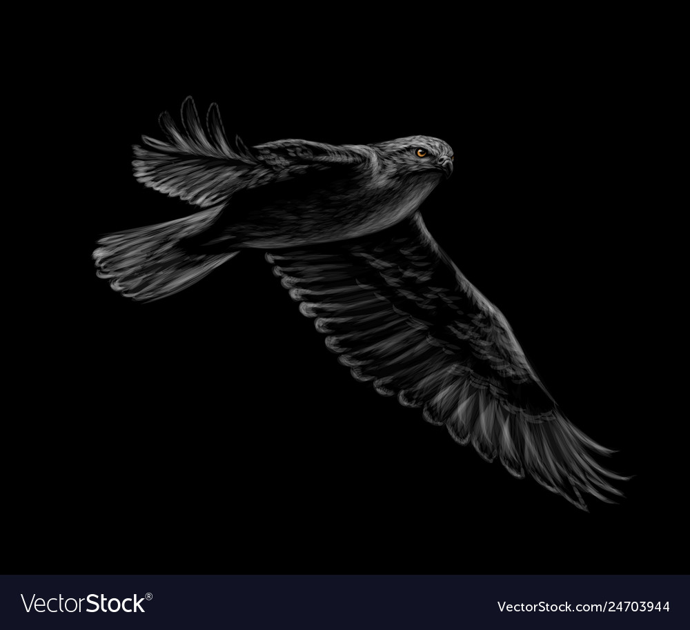 Portrait of a flying falcon on a black background
