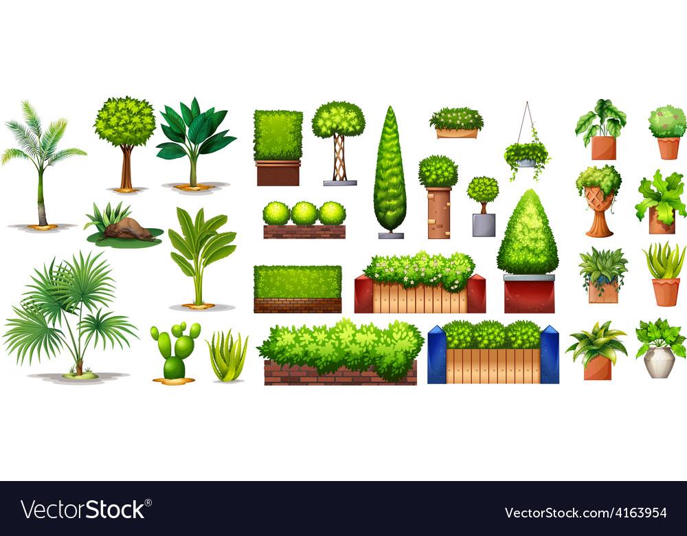 Different species of plants